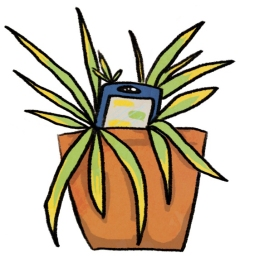 phone plant